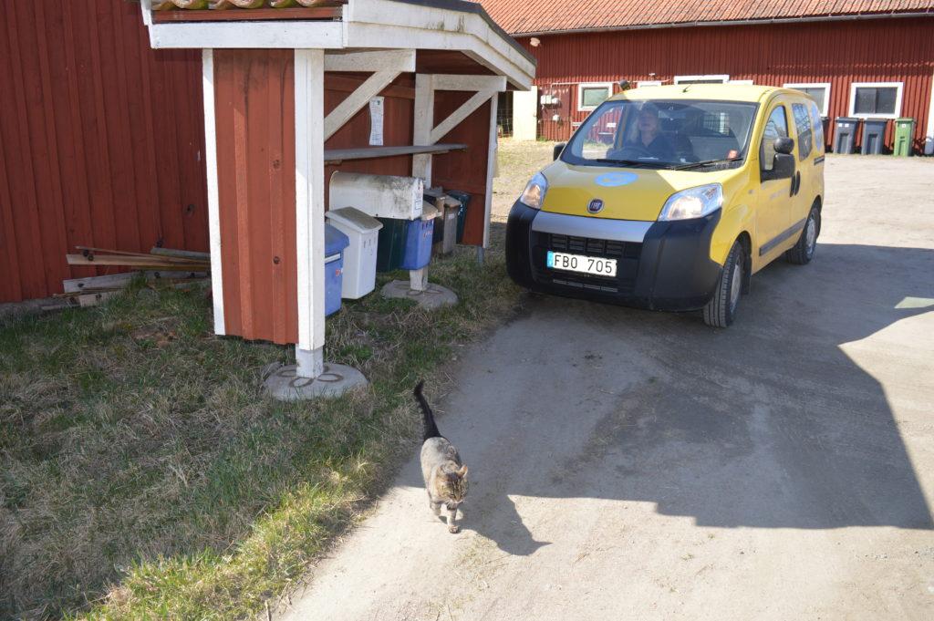 Kattgubben Kissen välkomnar lantbrevbäraren (som också är min mamma).