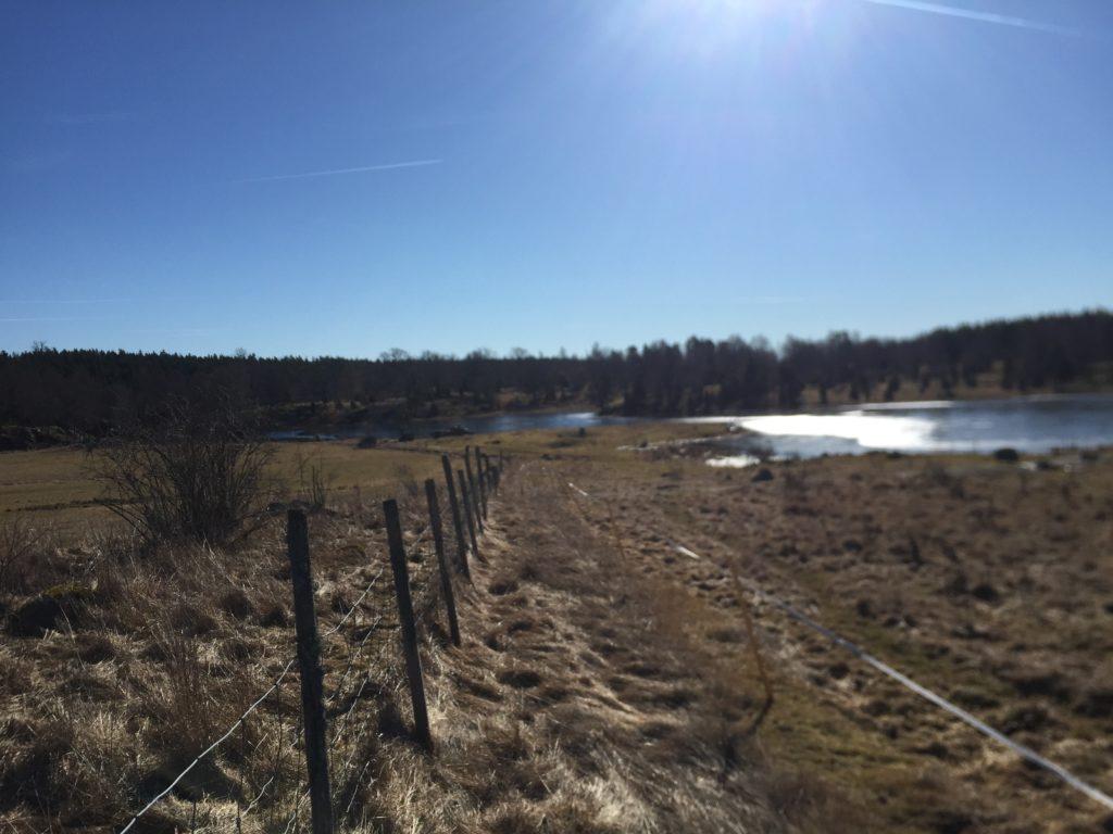 Betesmarkerna som vätter ner mot den anlagda dammen, som rinner vidare ner i Långsjön.